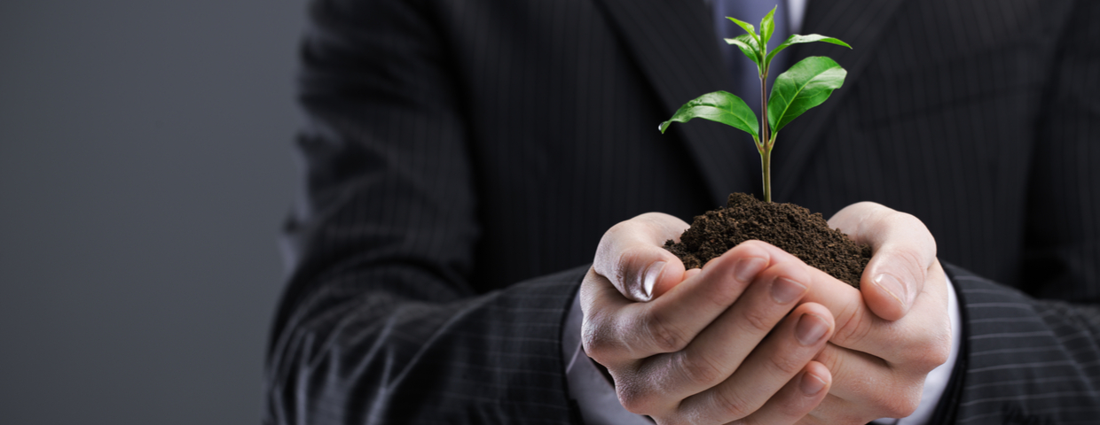 businessman holding seedling plant